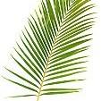 Tropical Rainforest壁紙の画像(壁紙.com)