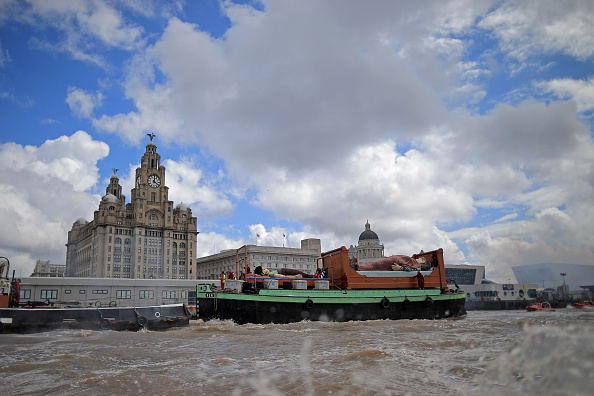 River「Giant's Take To The Streets Liverpool」:写真・画像(17)[壁紙.com]