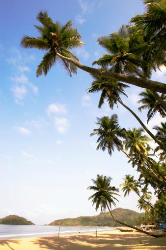 トウヒ「India, Goa, Palolem Beach」:スマホ壁紙(15)