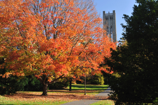 Pennsylvania「Swarthmore College」:スマホ壁紙(13)
