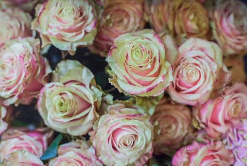 Flower Shop「High Street Florist」:スマホ壁紙(11)