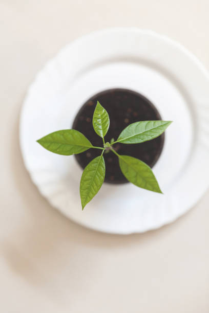 Overhead view of a seedling plant in a plant pot:スマホ壁紙(壁紙.com)