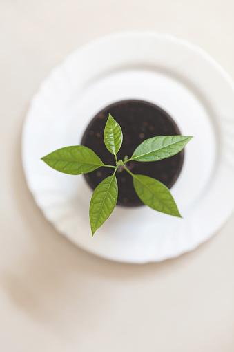 野菜・フルーツ「Overhead view of a seedling plant in a plant pot」:スマホ壁紙(17)
