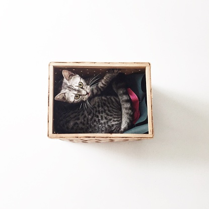 子猫「Overhead view of american shorthair kitten cat lying in a basket」:スマホ壁紙(13)