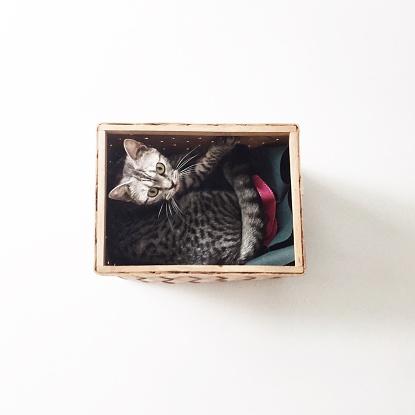 子猫「Overhead view of american shorthair kitten cat lying in a basket」:スマホ壁紙(5)