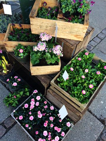 植木鉢「Overhead view of flowers for sale」:スマホ壁紙(8)