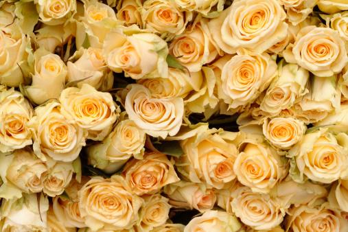 薔薇「Overhead view of many yellow roses」:スマホ壁紙(12)