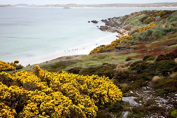 Gypsy Cove, Falklands:スマホ壁紙(壁紙.com)