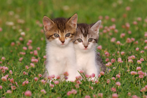 Kitten「Two kittens in meadow」:スマホ壁紙(4)