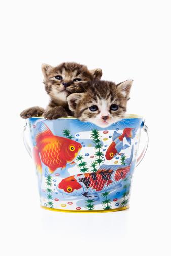 Kitten「Two kittens in bucket」:スマホ壁紙(17)