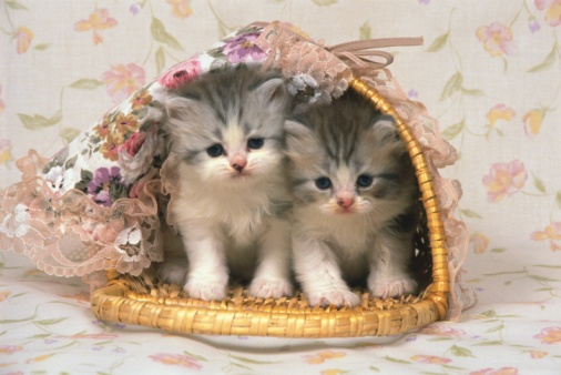 Kitten「Two Kittens Inside a Decorated Basket, Looking Down, Front View」:スマホ壁紙(9)