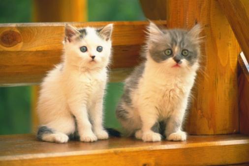 子猫「Two Kittens Sitting on a Wooden Stool, Looking Sideways, Side View, Differential Focus」:スマホ壁紙(6)