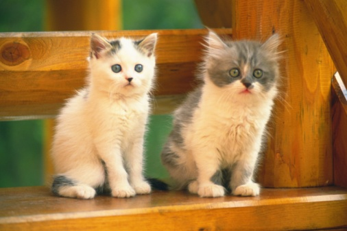 Kitten「Two Kittens Sitting on a Wooden Stool, Looking Sideways, Side View, Differential Focus」:スマホ壁紙(0)