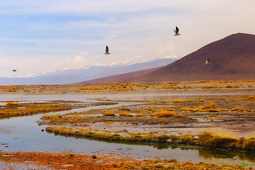 Bolivian Andes「Doves birds flying to freedom - Salar de tara marsh at sunrise - Turquoise lake at dramatic sky, Idyllic Atacama Desert, Altiplano landscape panorama – Antofagasta region - Chilean Andes, Chile, Bolívia and Argentina border」:スマホ壁紙(12)