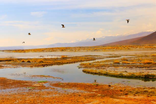 Doves birds flying to freedom - Salar de tara marsh at sunrise - Turquoise lake at dramatic sky, Idyllic Atacama Desert, Altiplano landscape panorama – Antofagasta region - Chilean Andes, Chile, Bolívia and Argentina border:スマホ壁紙(壁紙.com)