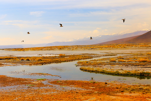 Bolivian Andes「Doves birds flying to freedom - Salar de tara marsh at sunrise - Turquoise lake at dramatic sky, Idyllic Atacama Desert, Altiplano landscape panorama – Antofagasta region - Chilean Andes, Chile, Bolívia and Argentina border」:スマホ壁紙(11)