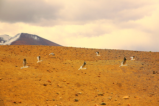 Andean Highlands「Doves birds flying to freedom - bolivian andes altiplano at dramatic sky, Idyllic Atacama Desert, Altiplano landscape panorama – Antofagasta region - Chilean Andes, Chile, Bolívia and Argentina border」:スマホ壁紙(19)
