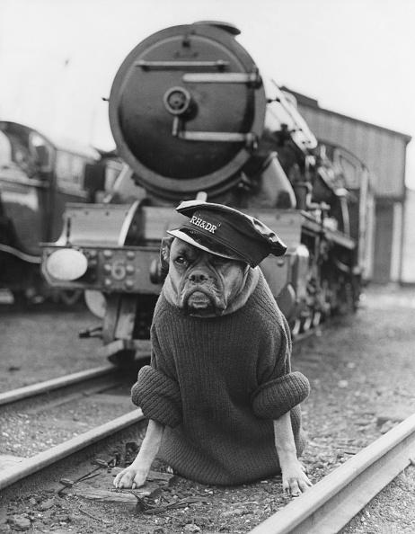 Outdoors「Railway Guard Dog」:写真・画像(15)[壁紙.com]