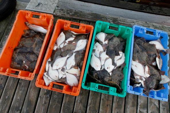 Fish「Baltic Sea Fishermen Face Uncertain Future」:写真・画像(13)[壁紙.com]