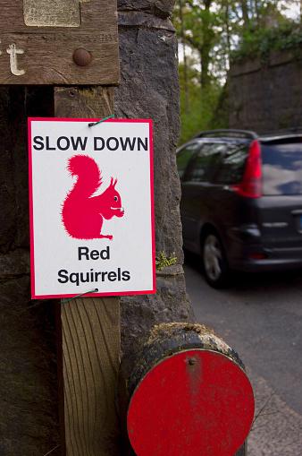 リス「Red squirrel warning sign.」:スマホ壁紙(12)