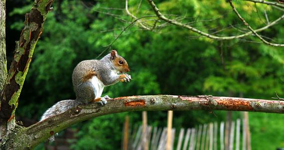 Squirrel「Red squirrel.」:スマホ壁紙(1)