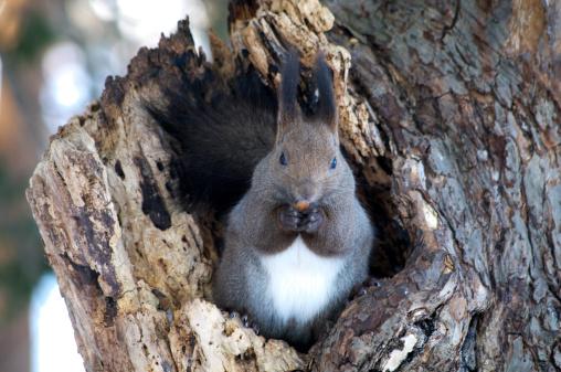 リス「Red Squirrel」:スマホ壁紙(6)
