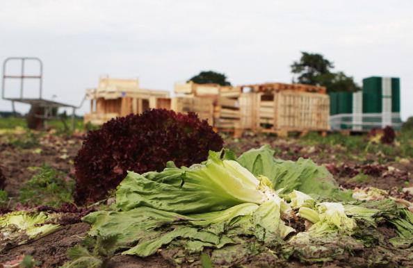 Salad「Farmers Seek Compensation Following EHEC Outbreak」:写真・画像(12)[壁紙.com]