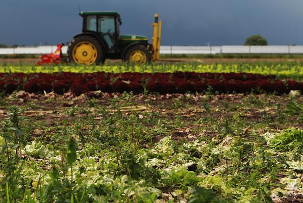 Salad「Farmers Seek Compensation Following EHEC Outbreak」:写真・画像(15)[壁紙.com]