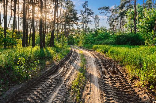 Ukraine「Ukraine, Dnepropetrovsk region, Novomoskovsk district, Tire tracks on dirt road in forest」:スマホ壁紙(17)