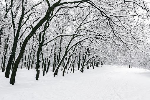 Branch「Ukraine, Dnepropetrovsk region, Dnepropetrovsk city, Treelined alley in winter」:スマホ壁紙(4)