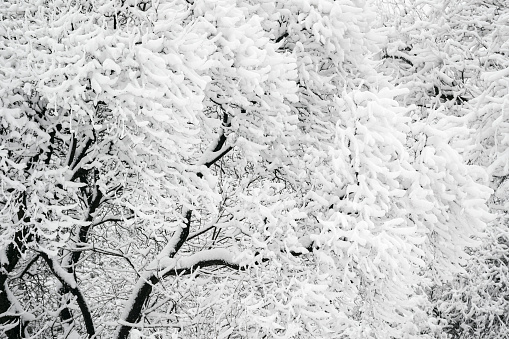 Branch「Ukraine, Dnepropetrovsk region, Dnepropetrovsk city, Close-up of frozen tree branches」:スマホ壁紙(6)
