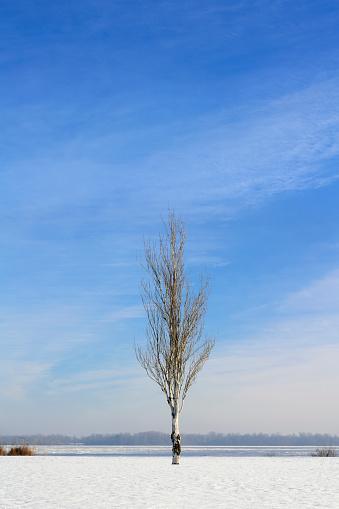 落葉樹「Ukraine, Dnepropetrovsk region, Dnepropetrovsk city, Lone birch tree in winter landscape」:スマホ壁紙(8)