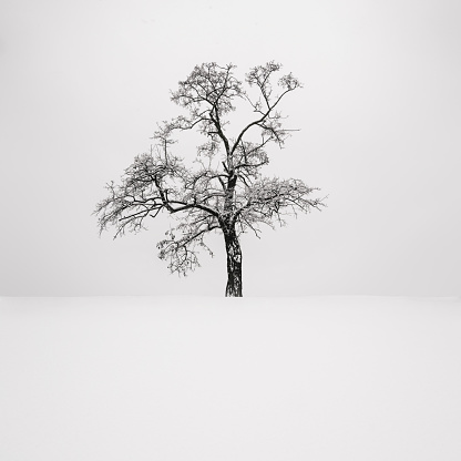 吹雪「Ukraine, Dnepropetrovsk region, Dnepropetrovsk city, Single tree in winter」:スマホ壁紙(5)
