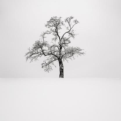 Single Tree「Ukraine, Dnepropetrovsk region, Dnepropetrovsk city, Single tree in winter」:スマホ壁紙(15)