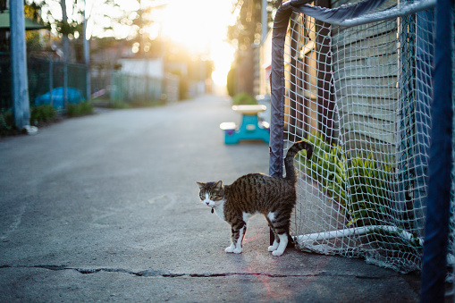Real Life「Tabby cat in an alley」:スマホ壁紙(4)