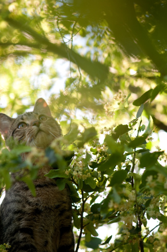 Focus On Foreground「Tabby cat in tree rays of sunlight filtered through branches」:スマホ壁紙(15)