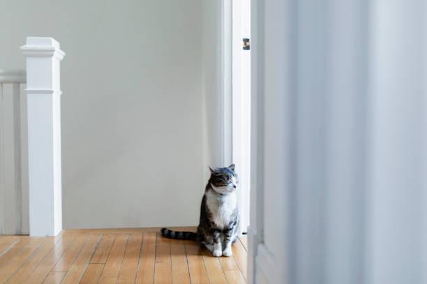 Tabby cat in a house:スマホ壁紙(壁紙.com)