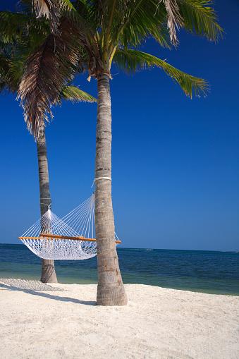 Frond「palms and hammock at the beach」:スマホ壁紙(18)