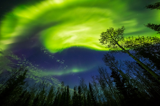星空「A bright aurora display shines above trees」:スマホ壁紙(15)