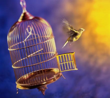 Gel Effect Lighting「Bird escaping from cage (Digital Composite)」:スマホ壁紙(15)