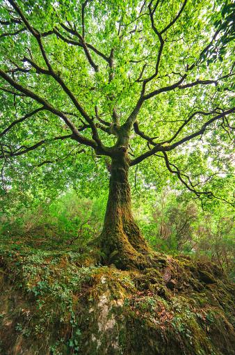春「Spain, Galicia, Ferrol, Low angle shot of a three in the forest」:スマホ壁紙(0)