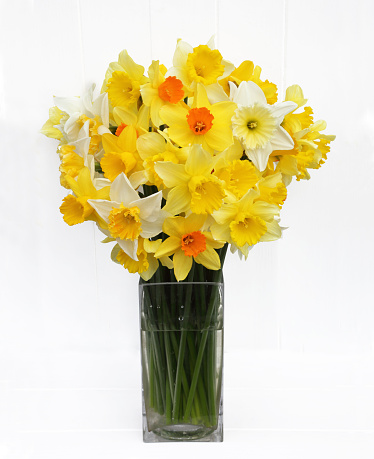 水仙「Bunch of mixed daffodils from English garden.」:スマホ壁紙(0)