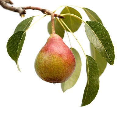 Pear「絶縁ペア」:スマホ壁紙(17)