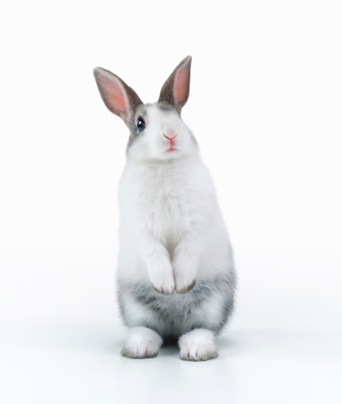 Rabbit - Animal「A rabbit standing」:スマホ壁紙(18)