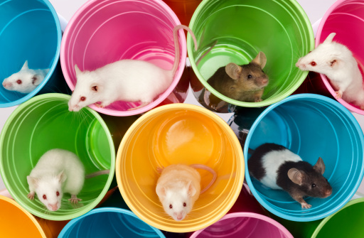 Making A Face「Mice Living In Colorful Mouse Apartments, Condos of Plastic Cups」:スマホ壁紙(10)