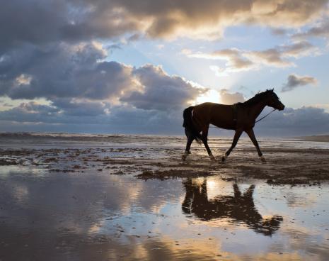 馬「馬のビーチを歩くに不安定な空模様」:スマホ壁紙(6)