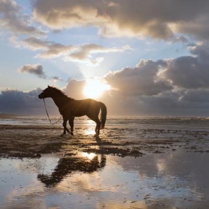 馬「馬のビーチを歩くに不安定な空模様」:スマホ壁紙(15)