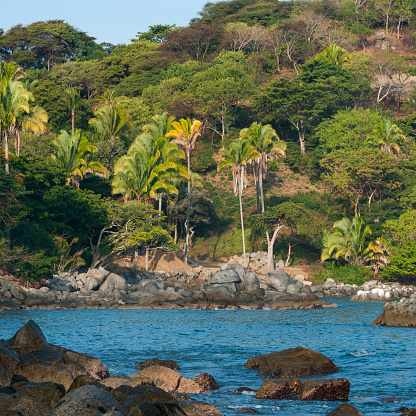 Sayulita「Trees on a slope along the coast; sayulita mexico」:スマホ壁紙(15)