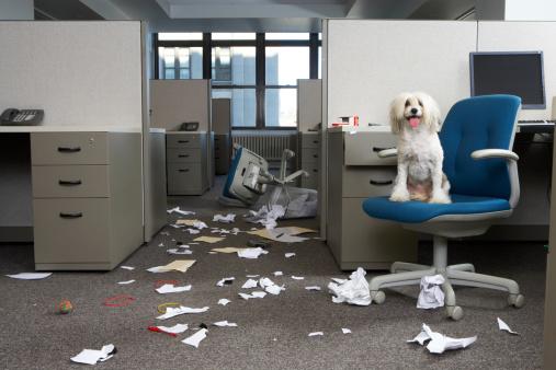 Chaos「Dog on chair, messy office」:スマホ壁紙(14)