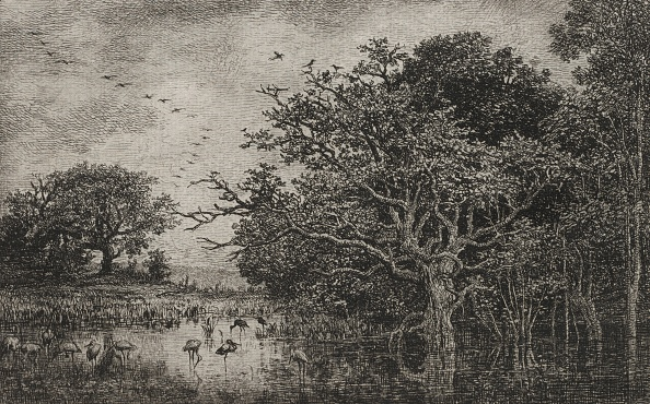 Etching「The Marsh With Storks」:写真・画像(14)[壁紙.com]